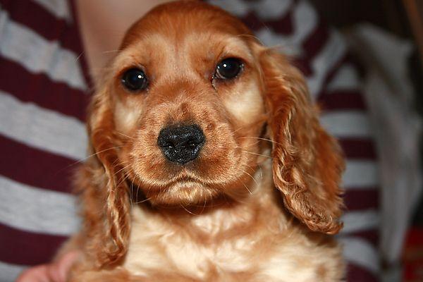 Puppy Ruby