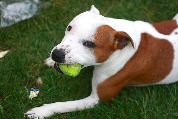 how to become a staffie nysf