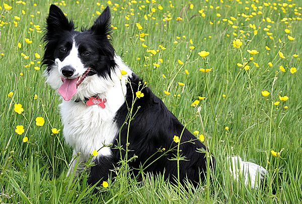 Bronte amongst the Buttercups