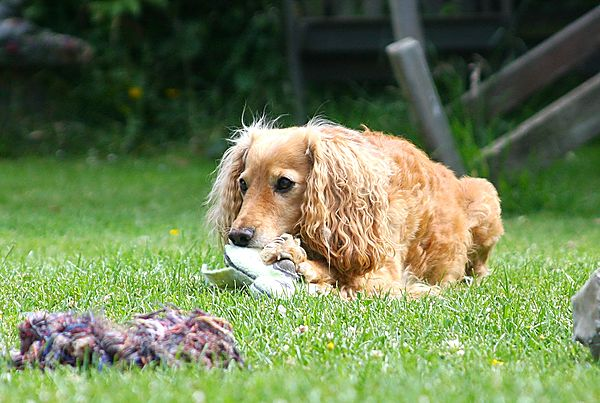 Chewing Toys