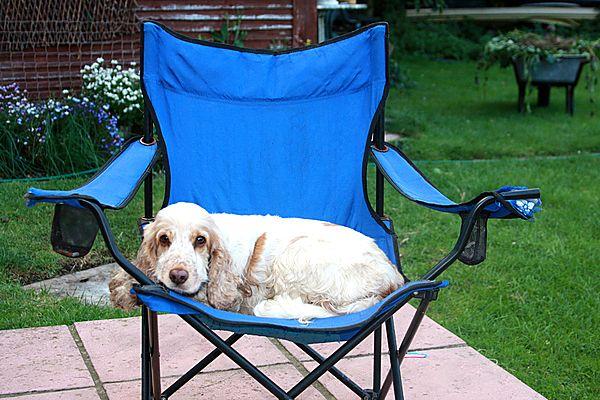 Deck chair for Missie