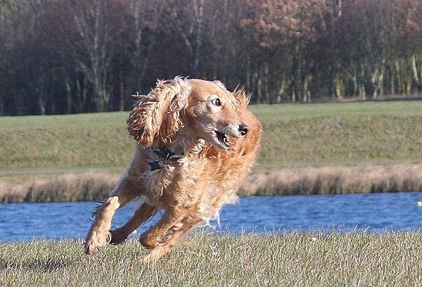 A game of chase