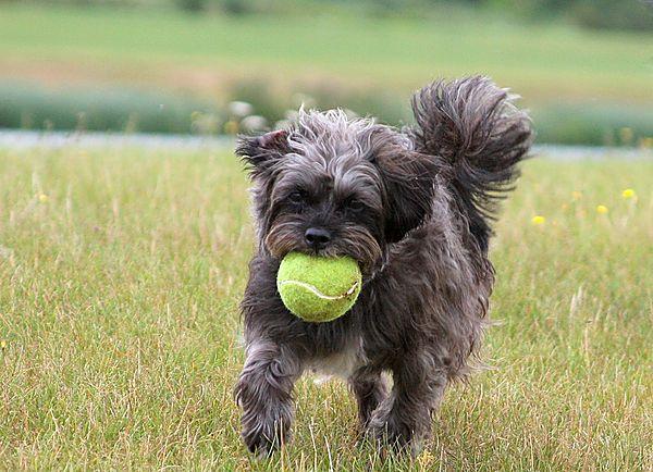 Bonnie loves a game of ball