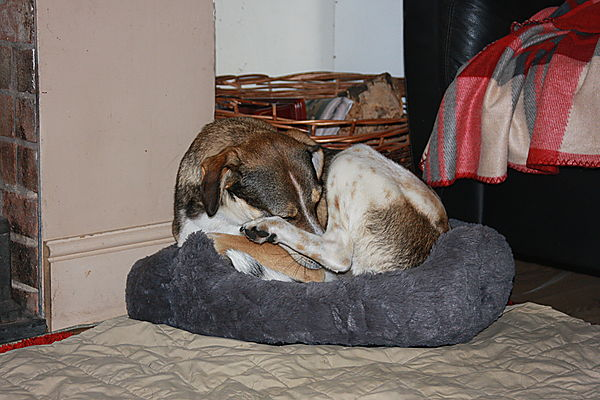 Its not my bed - but I like it