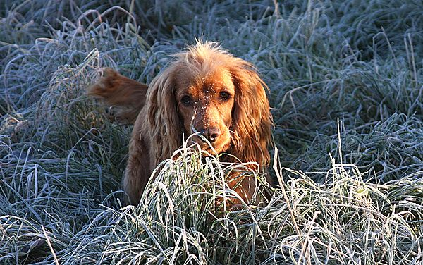 Loves a frosty morning walk