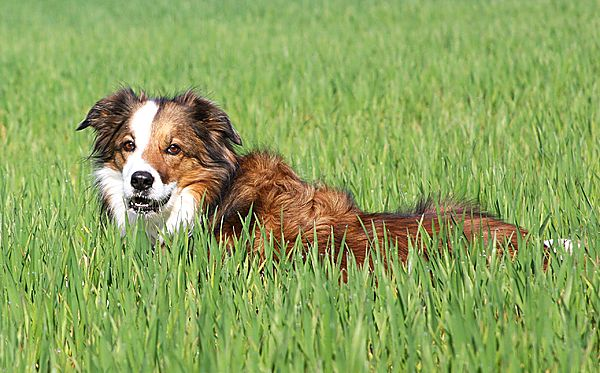 Just resting in the fields