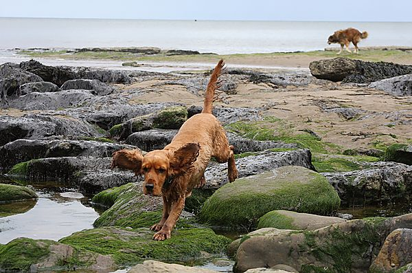 Ruby rock hopping