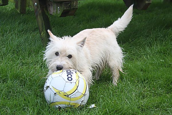 Getting to grips with a football