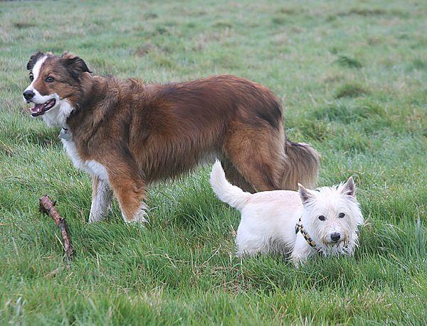 Bertie with Woody