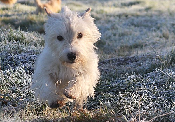 Bertie in the frost