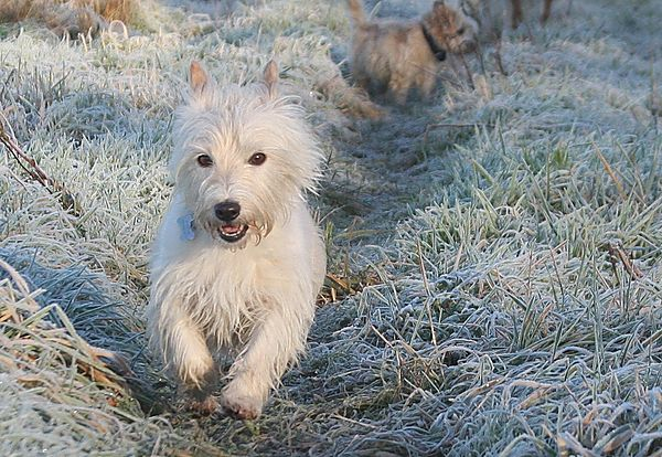 Frost walks with Bertie