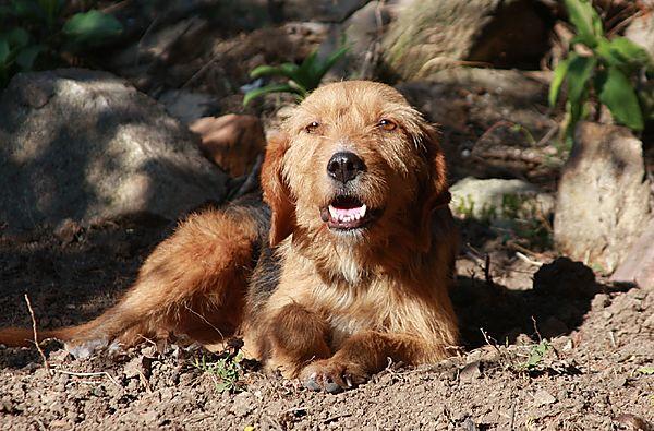Eway - a street dog in Bulgaria