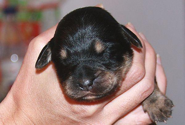 Eway's Pup no. 6
