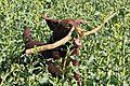 photo thumbnail A game of sticks