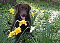 photo thumbnail Flower Power