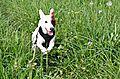 photo thumbnail Bella enjoying herself