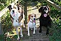 photo thumbnail Marley with Bobby and Woody