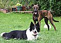photo thumbnail Bronte and Dobby