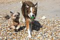 photo thumbnail Bailey and Woody