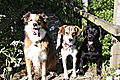 photo thumbnail Marley and Honey with Woody