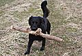 photo thumbnail Found the biggest stick to carry