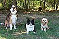 photo thumbnail Woody Bronte and Ozzie