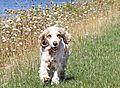 photo thumbnail Missie