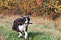 photo thumbnail Autumn Fun