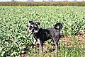 photo thumbnail Riley on field walks