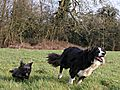 photo thumbnail These two fun loving dogs live together