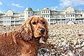 photo thumbnail Ruby at Bognor Regis