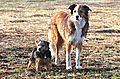 photo thumbnail Little and Large