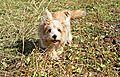 photo thumbnail Flo on walks