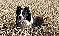 Buster crop jumping