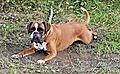 Mucky pup Mason